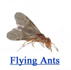 How To Get Rid Of Black Flies Apps Directories