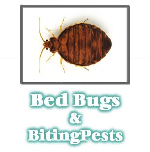 Bed Bug Information -  Pest Control