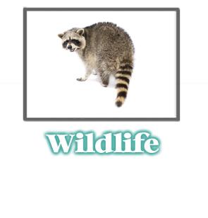 Animal and Wildlife Information -  Pest Control