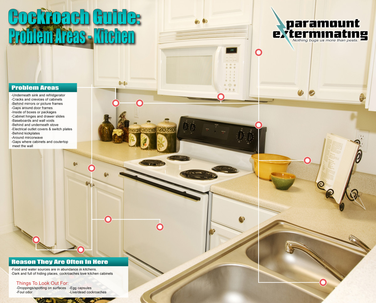Cockroach-Guide-Kitchen