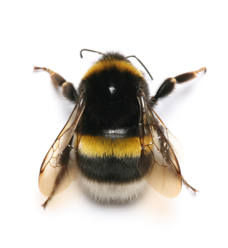 Paramount Exterminatingpest Library Bees Wasps Bumble