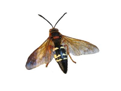 Paramount Exterminatingpest Library Bees Wasps Cicada