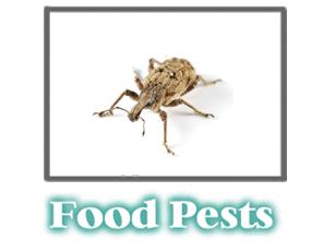 Food Pest Information -  Pest Control