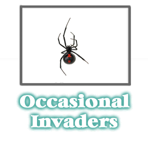Occasional Invader Information -  Pest Control