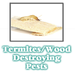 Termite Information -  Pest Control