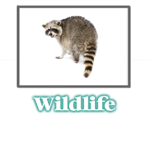 Animal and Wildlife Information -  Pest Control