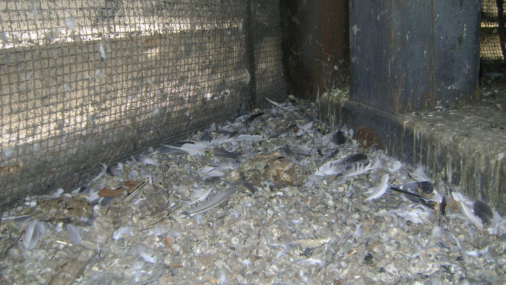 Paramount Exterminatingbird Control Paramount Exterminating