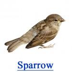 Sparrow - Pest Library
