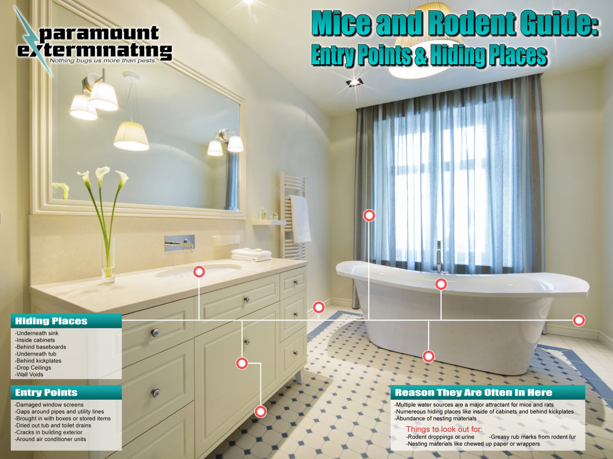 Mice-and-Rodent-Guide-Bathroom
