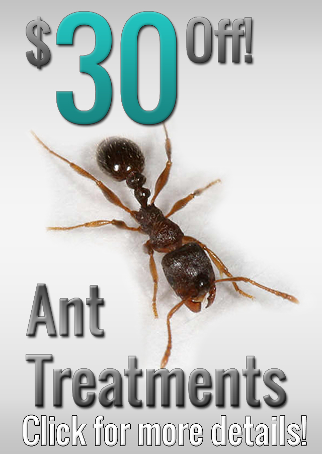 ANT PEST CONTROL SERVICES AD 320